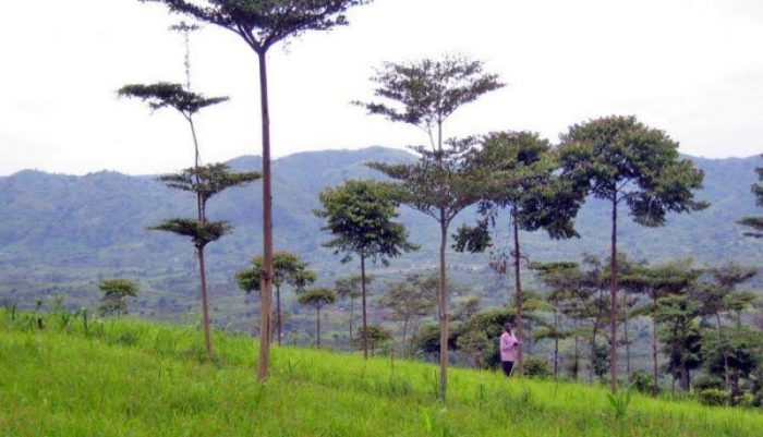 Ugandans should embrace tree planting